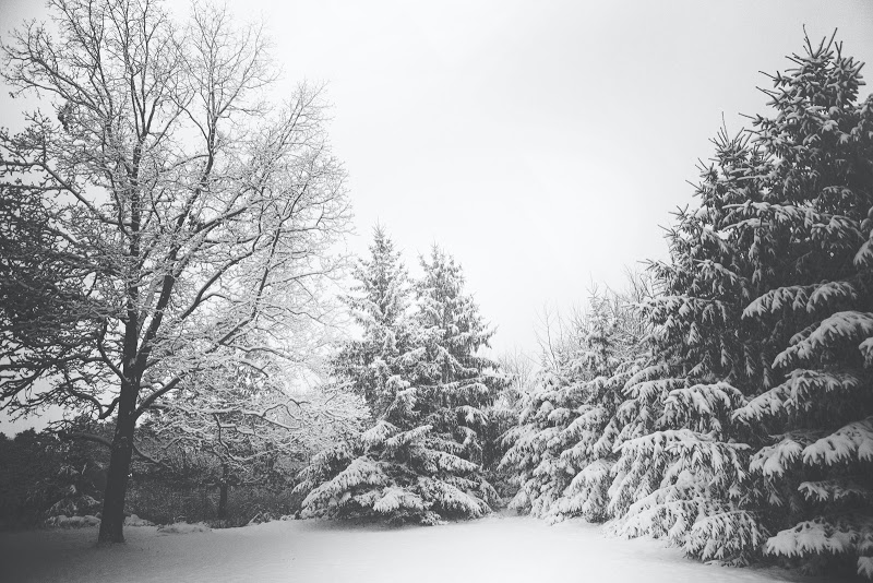 A Canadian winter forest scene