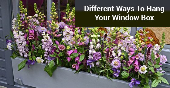 Different-Ways-To-Hang-Your-Window-Box