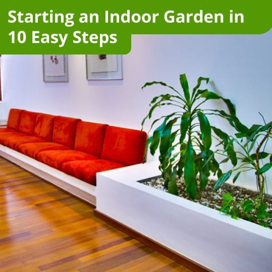 Starting an Indoor Garden in 10 Easy Steps