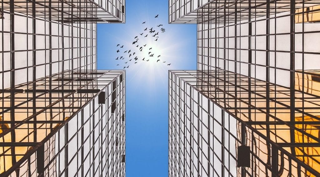 Birds flying in the sky surrounded by buildings with reflective glass windows