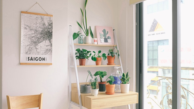 Potted plants on a desk near large window