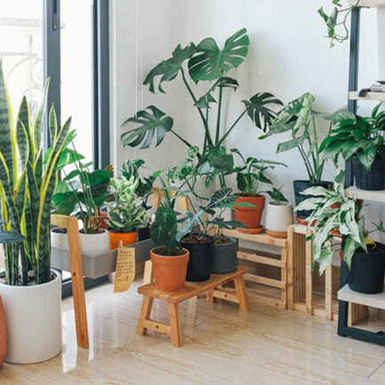 A collection of the best indoor plants