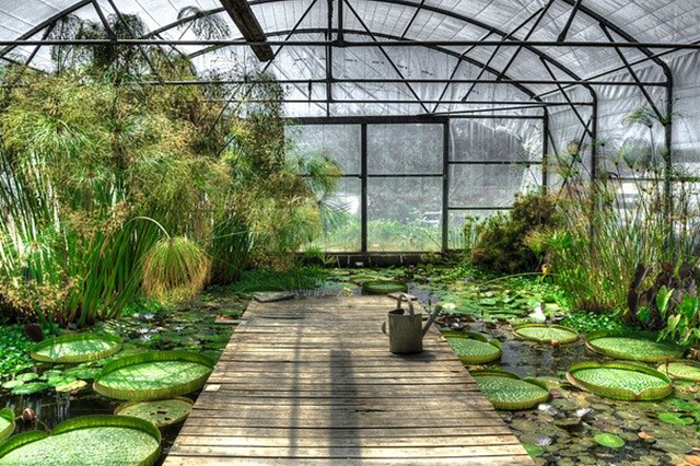 Greenhouse with lotus and water plants