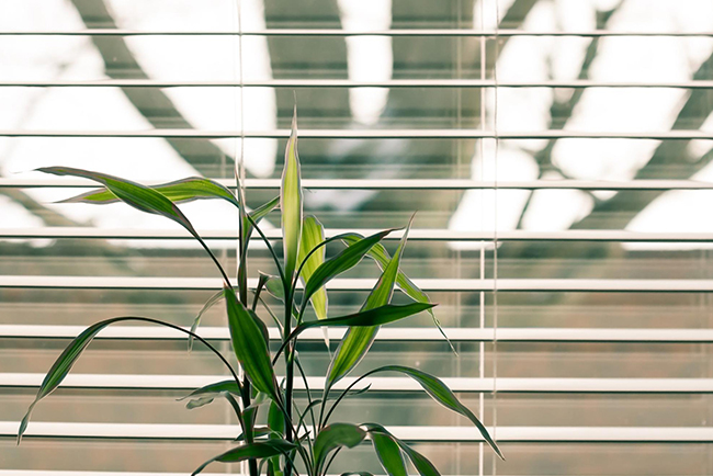 Close up of clean slatted plastic blinds with an indoor plant