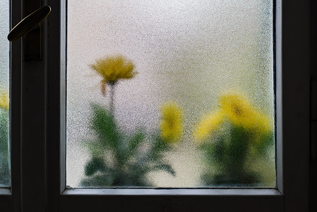 Frosted glass windows with sunflowers