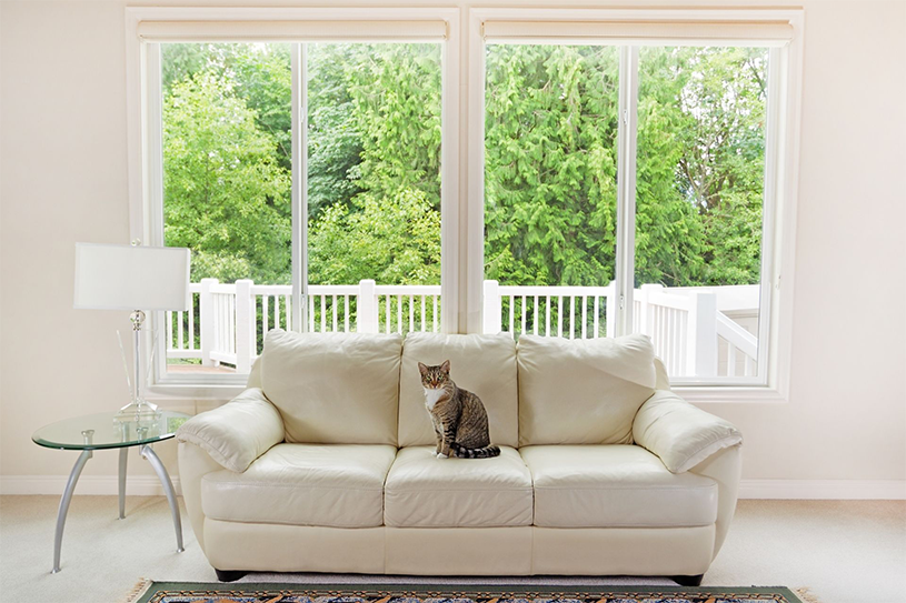 A cat sitting on a white couch by a set of windows
